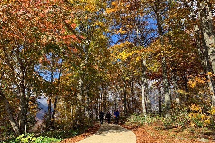 最寄りのスキー場では秋に紅葉が楽しめます。